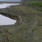 Dunarea prag depuneri aluviuni materei organica in descompunere