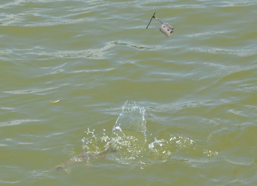 Cosultele din tub PVC foarte eficinte in pescuitul la scobar