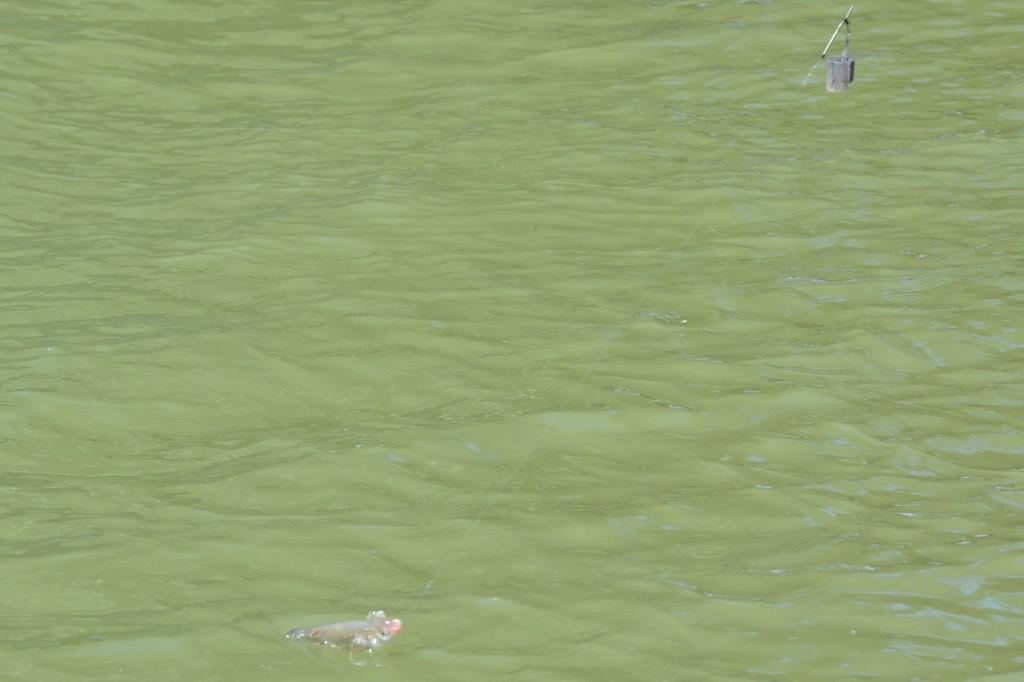 Struna lunga este recomandata in pescuitul la scobar