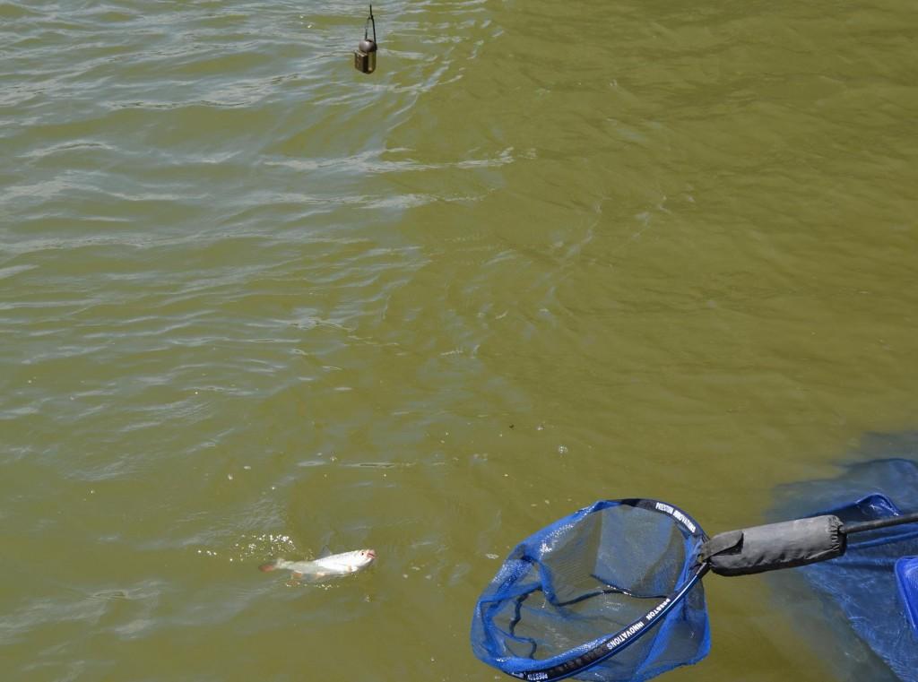 Strunele lungi in general dau cele mai bune rezultate in pescuitul scobarului