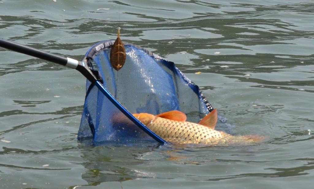 ESP Mega Method Feeder solutia pentru pescuitul pe Dunare in curent