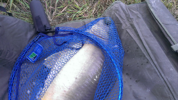 pescuit la feeder balta albastraq