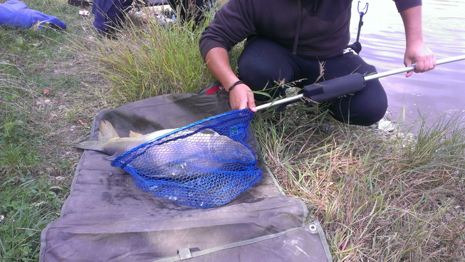 pescuit la feeder balta albastra