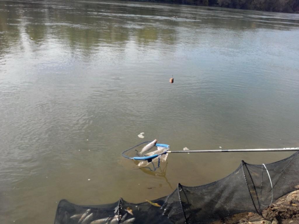 pescuit la feeder concurs articole