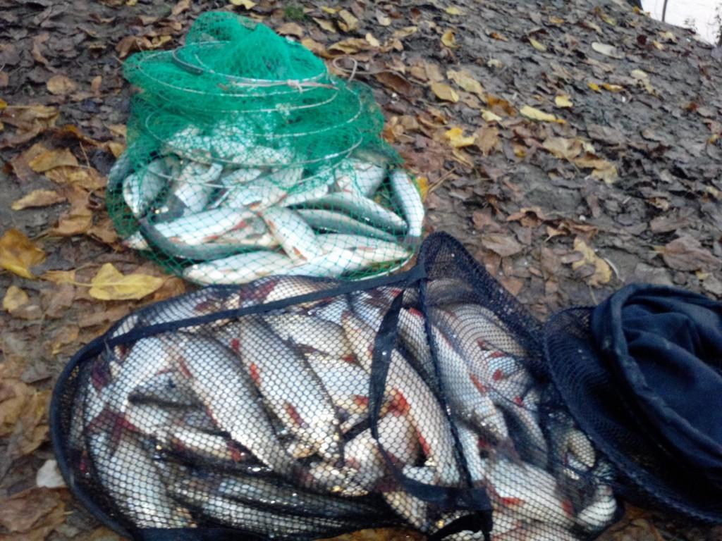 pescuit scobari la feeder