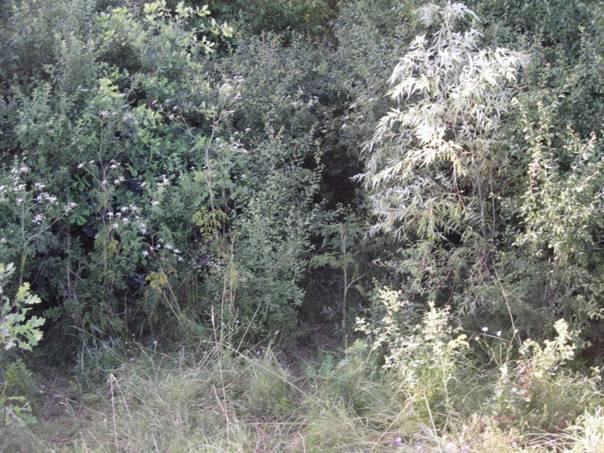 """Carare prin """"jungla"""" ce duce in imparatia mrenelor"""