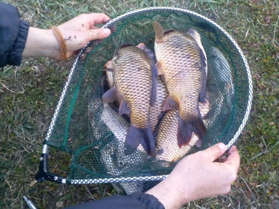 pescuit la feeder florin schiau concurs articole