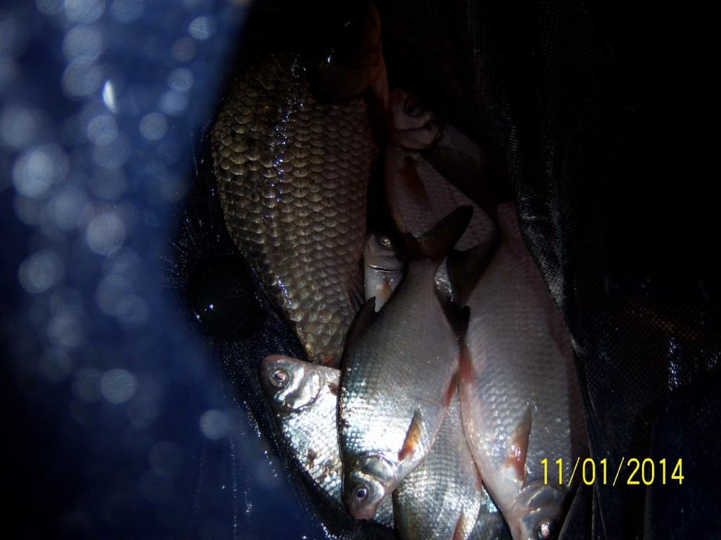 pescuit la feeder platica tonea eduard denis