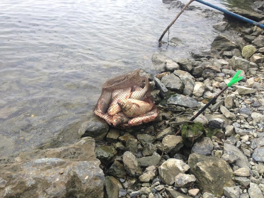 pescuit feeder dunare caras