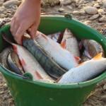 pescuit la feeder scobari