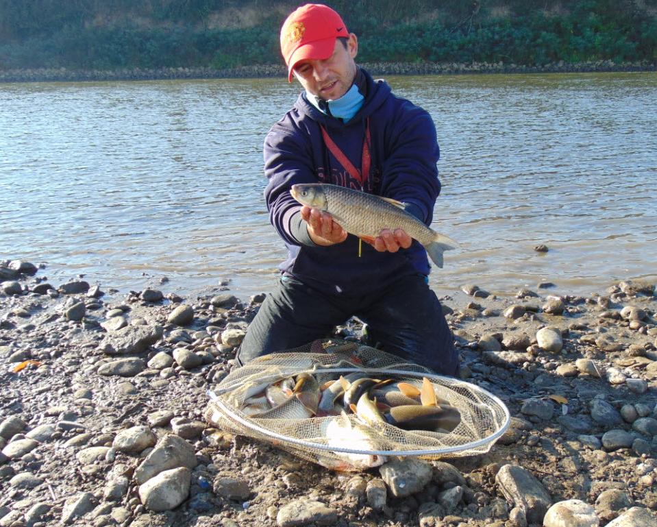 pesti captura1